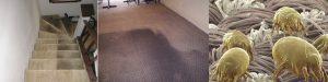 Dịch vụ giặt thảm 1