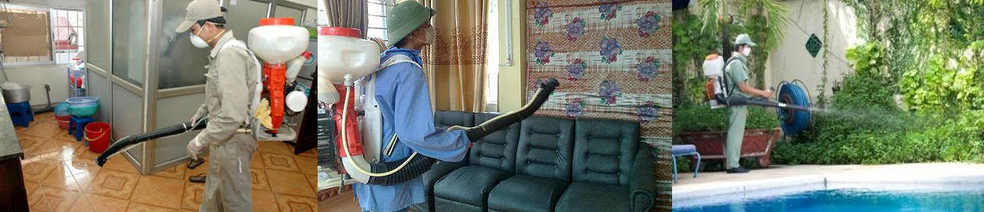 dịch vụ phun thuốc diệt muỗi tại Hạ Long